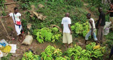 Développement agricole : la France décaisse 20 millions de FCFA pour des exploitants congolais