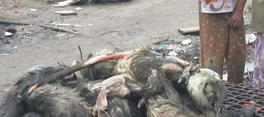 La période de fermeture de chasse est loin d'être respectée au Congo