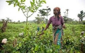 La Fao entend promouvoir l'agriculture familiale au Congo