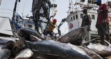 La société hollandaise «Damen» veut contribuer au développement de la pêche au Congo