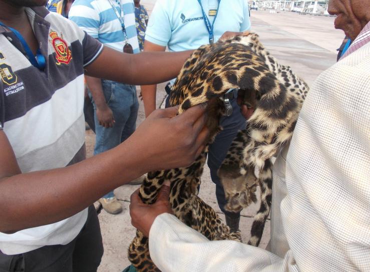 La saisie effectuée à l'aéroport de maya-maya de Brazzaville / photo DR