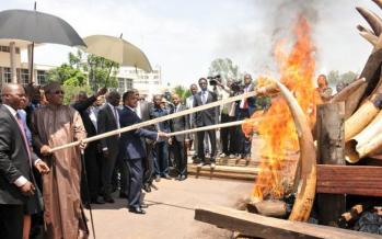 Les Présidents Sassou et Idriss Déby incinèrent 5 tonnes d'ivoire à Brazzaville