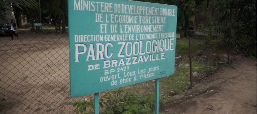 Les Brazzavillois pourraient retrouver leur parc zoologique