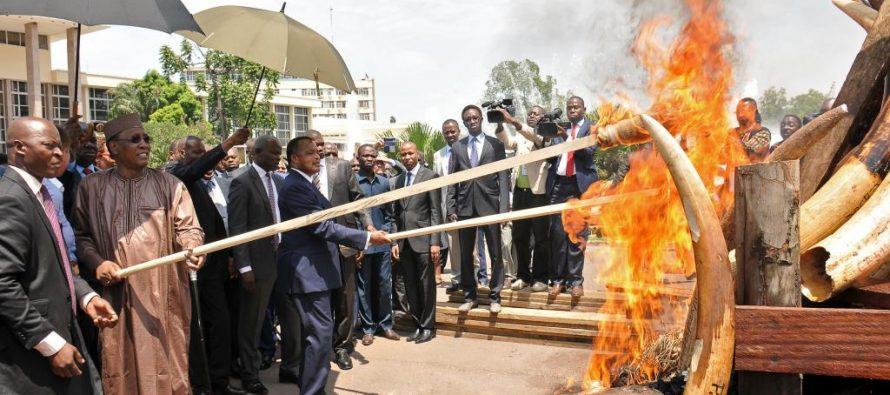 Congo: La Banque mondiale promet son soutien à la lutte contre le braconnage