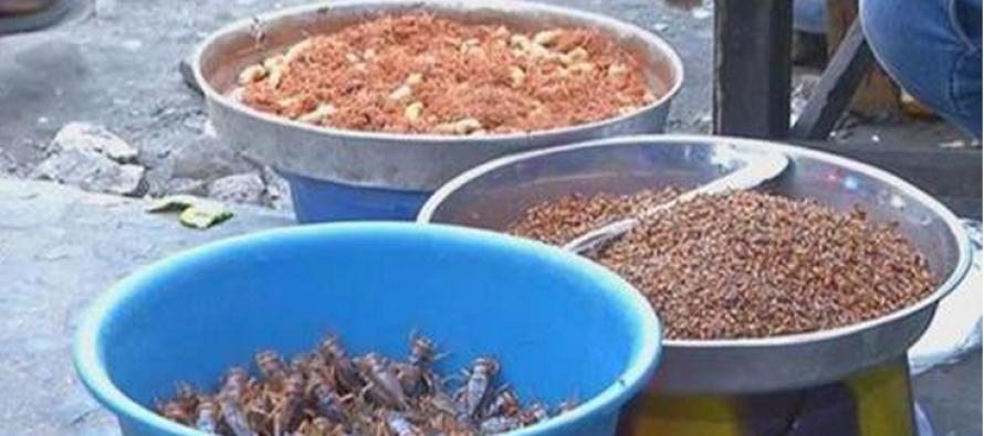 VIDÉO – La RDC se tourne vers la culture d'insectes pour lutter contre la faim
