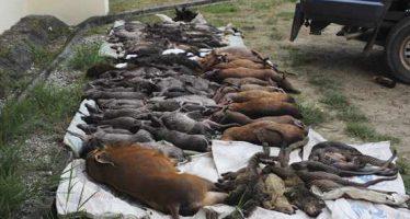Congo : Fermeture de la chasse sportive sur toute l'étendue du territoire national