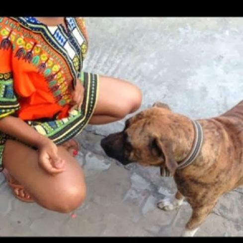 Vous n'aurez jamais imaginer ce que ce chien a fait à cette femme