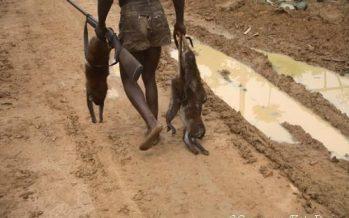 Fermeture de la chasse au Congo-Brazzaville