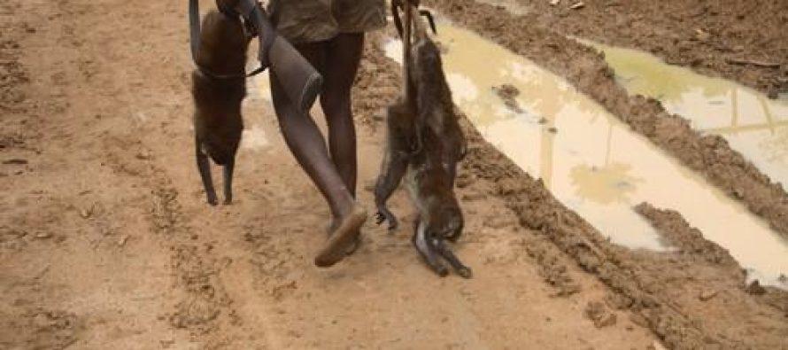 RDC : Un chasseur tue ses deux enfants confondus au gibier