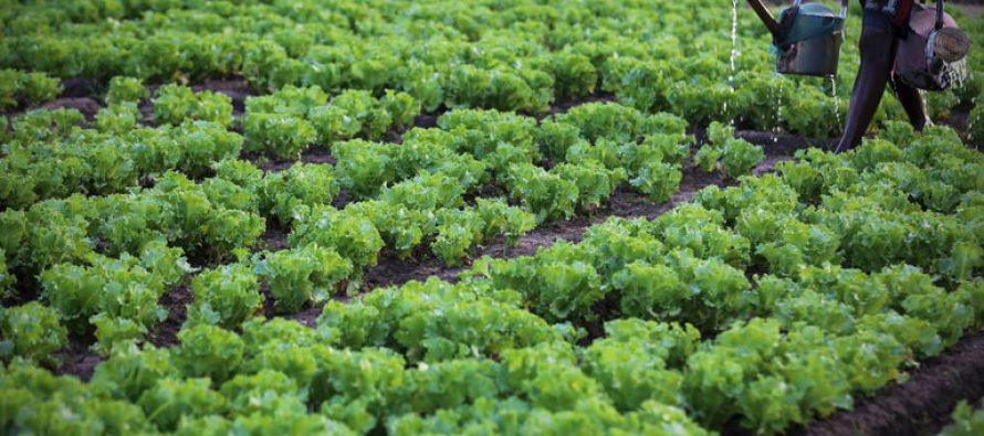 Le Congo mise sur l'agriculture pour stimuler la croissance économique