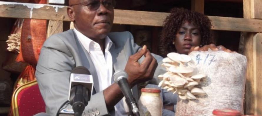 Vidéo : des fermes urbaines de champignons en plein Brazzaville