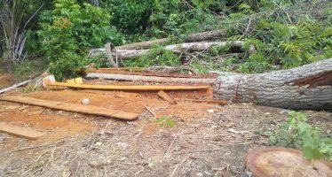 Congo Brazzaville: L'exploitation illégale du bois dépouillent les forêts congolaises
