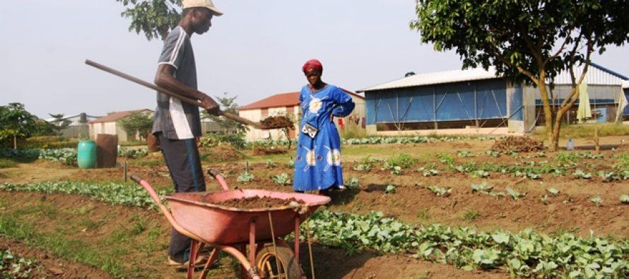 L'autosuffisance alimentaire au Congo est-elle restée une lettre morte à nos jours ?