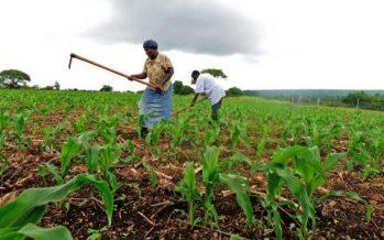 Congo : le développement économique passera par l'agriculture, selon l'économiste Léon Mayeko