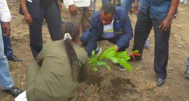 Congo : 2000 plants enfouis à l'occasion de la 31ème de la journée nationale de l'arbre