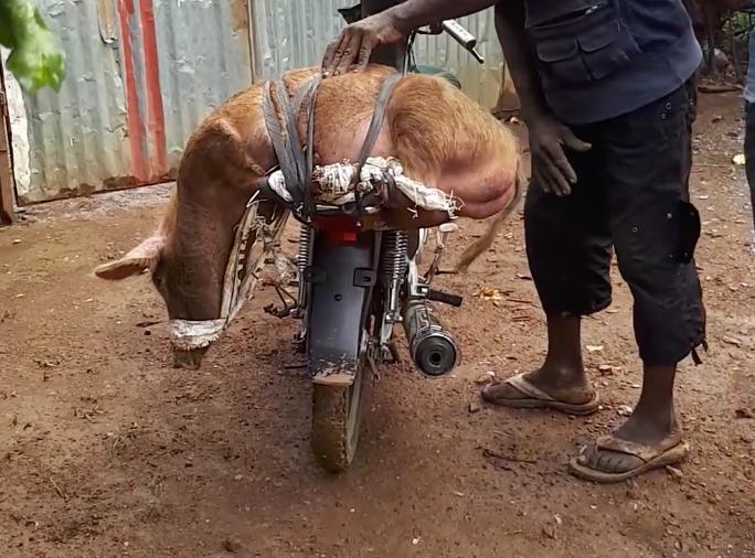 Un soldat vole un cochon dans un parc à Dolisie