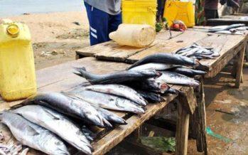 Pêche maritime : le Congo entend durcir sa réglementation