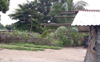 Une nouvelle loi sur l'occupation des terres au Congo