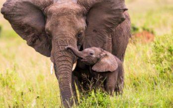 Validation d'un nouveau plan national pour la protection des éléphants au Congo
