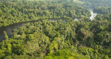 Plus de transparence souhaitée dans la gestion des ressources forestières dans le Bassin du Congo