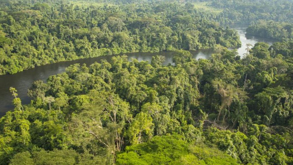 La forêt du bassin du Congo