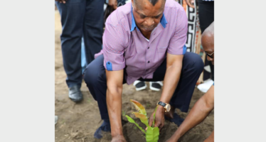 32ème journée nationale de l'arbre : des milliers d'arbres plantés au Congo