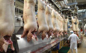 La RDC interdit l'importation de la viande de porc de l'UE