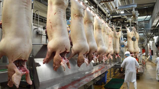 viande de porc de l'UE