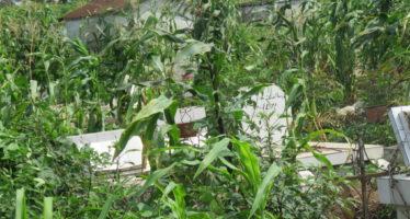 Pointe-Noire: l'ancien cimetière de Mongo Kamba transformé en champ de maïs