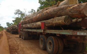 Vers un nouveau Code forestier au Congo
