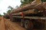 Le Congo dément les ONG fustigeant sa gouvernance forestière