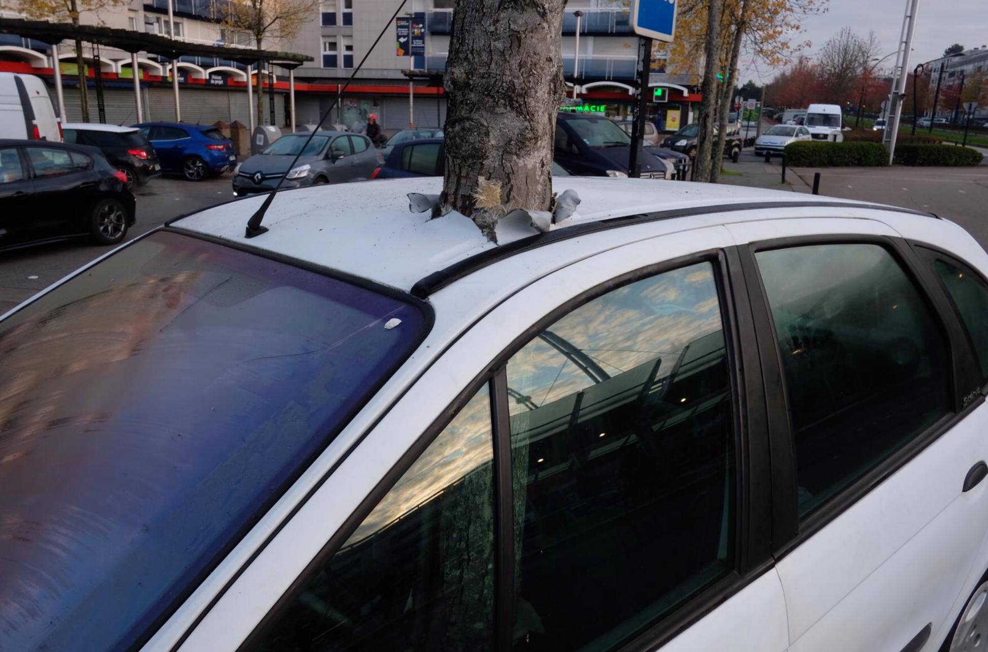 Un arbre a poussé dans une voiture